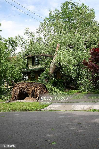 Home damaged by tree