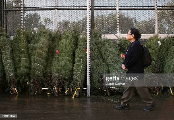 Home Depot customer browses a display of Christmas trees at a Home Depot store December 2 2008 in Colma California Home Depot sells more Christmas...