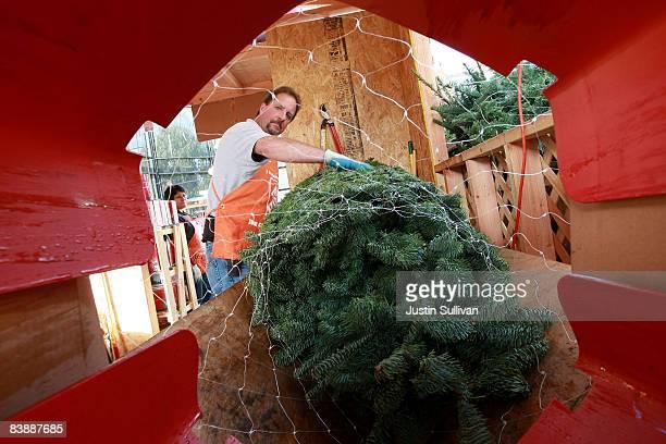Home Depot employee Gordon Prescott pulls a Christmas tree through a netting machine at a Home Depot store December 2 2008 in Colma California Home...