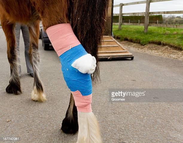 Heimat von horse hospital