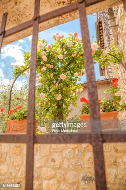 Home garden through window