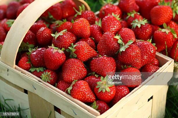 Home cultivés des fraises dans panier en bois