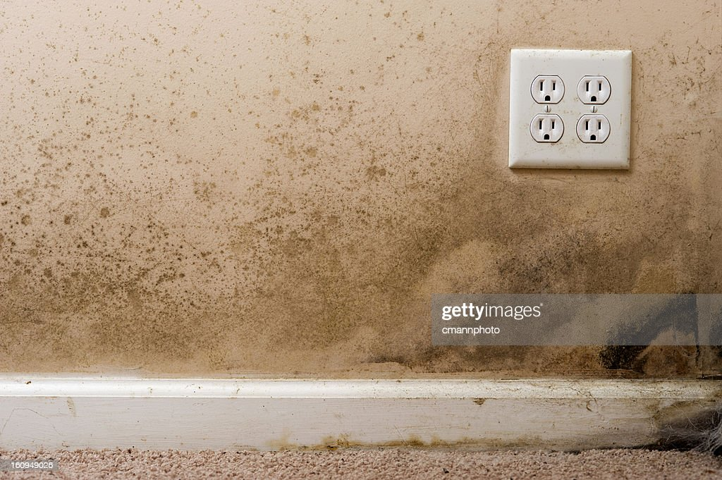 Home interior Black Mold on basement wall