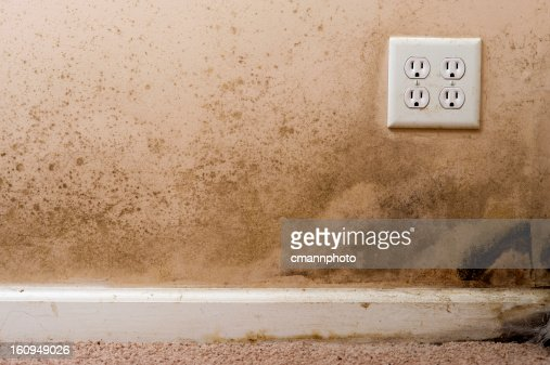 how to clean black mold on basement walls