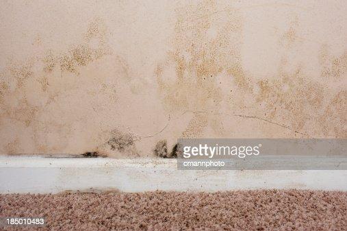 Home interior Mold on basement wall
