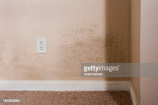 Home interior Mold