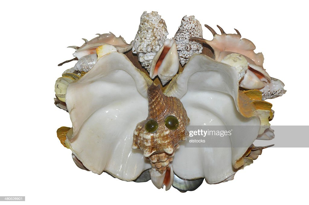 Home made butterfly seashell decor : Stockfoto