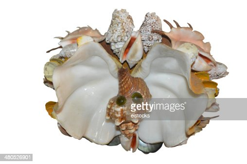 Home made butterfly seashell decor : Stock Photo
