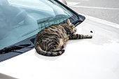 Homeless cat sleeping on the car