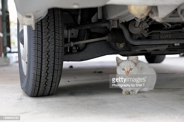 Homeless kitten under car, Japan