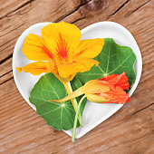 Homeopathy and cooking with medical plants, nasturtium.