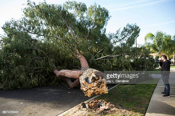 RESEDA CAFEBRUARY 20 2014A homeowner who didn't want to give his name stands in front of his house where a pine tree about 45feet tall fell around...