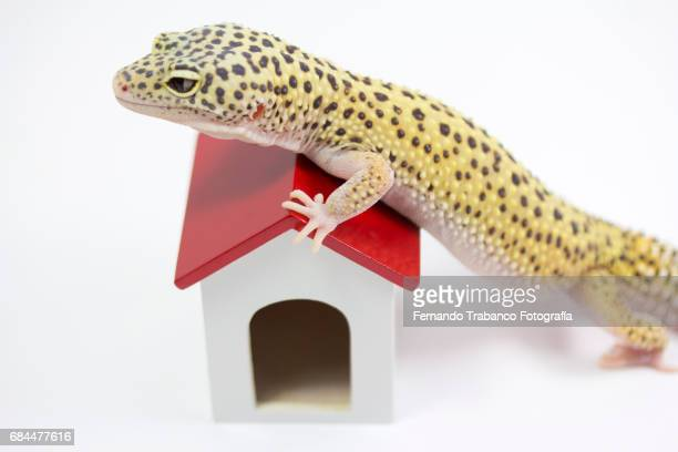 Homeowner with mortgage, lizard raised on the roof of a house