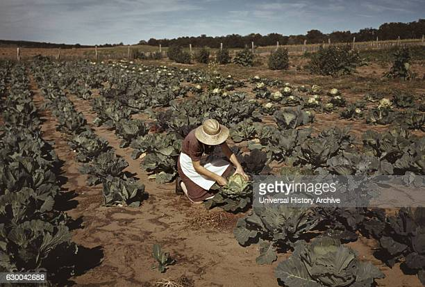 Homesteader's Wife with Homegrown Cabbage Pie Town New Mexico USA Russell Lee October 1940