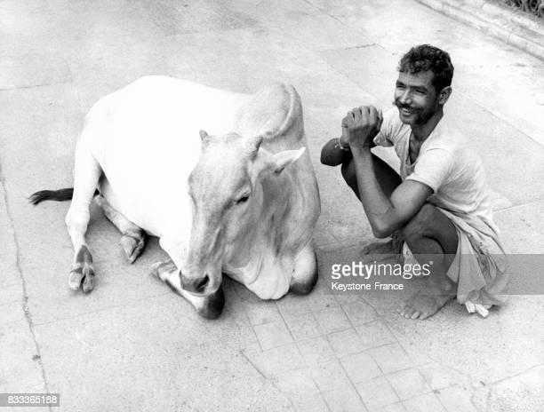 Homme et vache sacrée dans les rues de Calcutta Inde