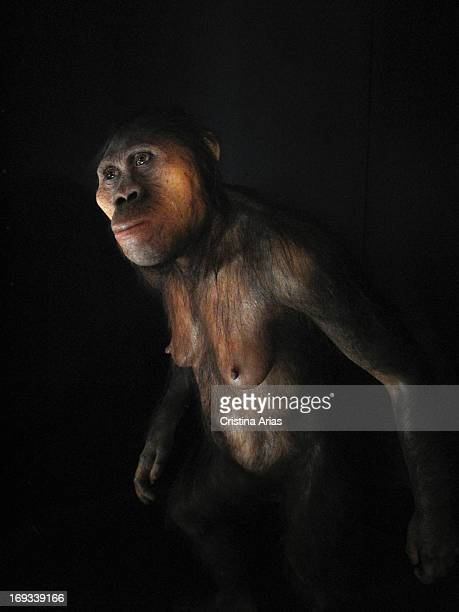 Homo Ergaster reproduction based in the remains of an hominid knowed as narikotome boy in the chamber of evolution of the Museum of Human Evolution...
