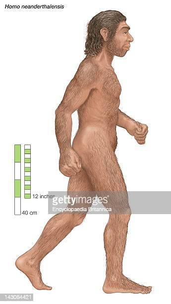 Homo Neanderthalensis Who Ranged From Western Europe To Central Asia For 100000 Years Before Dying Out About 30000 Years Ago