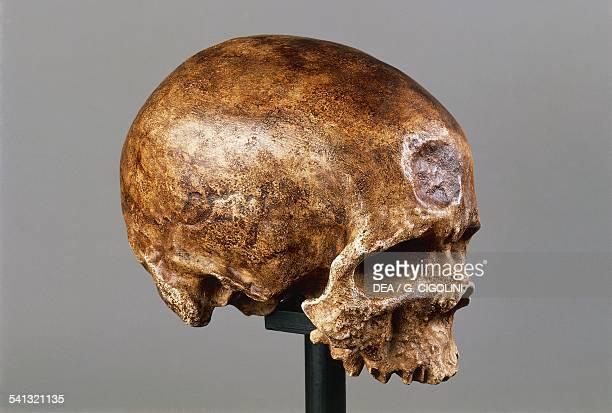 Homo sapien skull found in Abri de CroMagnon France