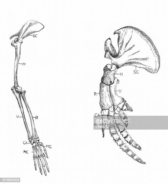 scapula stock photos and pictures