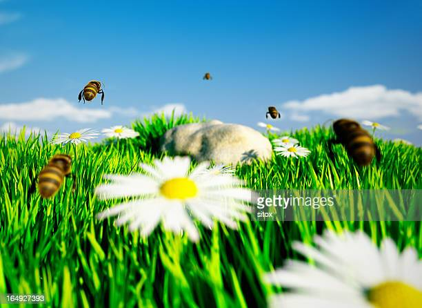 Honey bees entering the meadow