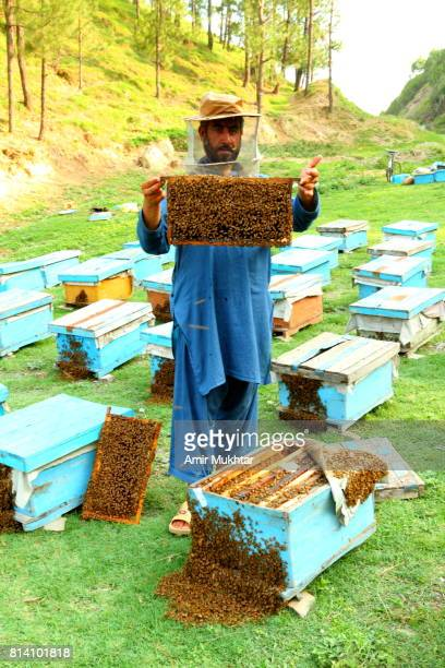Honey Farm Worker