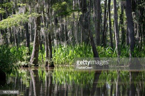 Honey Island Swamp- Louisiana : Stock Photo