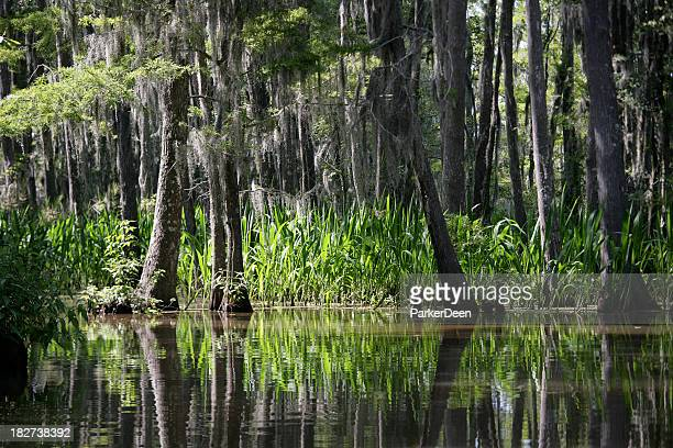 Isla de miel Swamp- Louisiana
