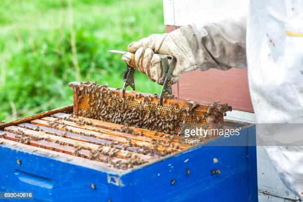Honey workers