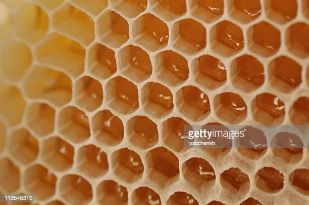 Bienenwaben Makro