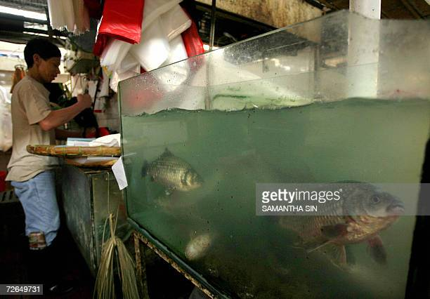 Samantha fish stock photos and pictures getty images for Chinese fish market near me