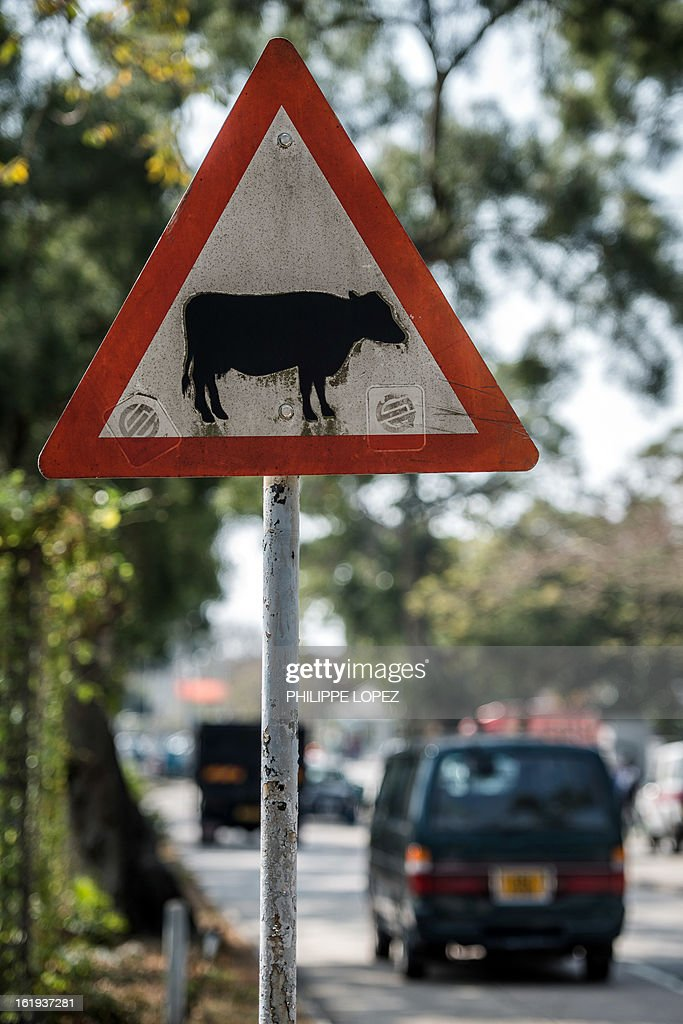 HongKong-environment-animals-buffalo,FEATURE by Sam Reeves This picture taken on January 30, 2013 shows a road sign warning about buffalos on Lantau island in Hong Kong. A short journey from gleaming skyscrapers in the hectic centre of Hong Kong, majestic water buffaloes roam over jungle-clad hills and through secluded villages where they once worked as farm animals. AFP PHOTO / Philippe Lopez