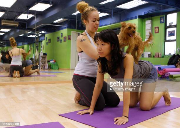 HongKonglifestyleanimalyogaoffbeatFEATURE by Judith Evans This picture taken on October 8 2011 shows yoga instructor Suzette Ackermann assisting...