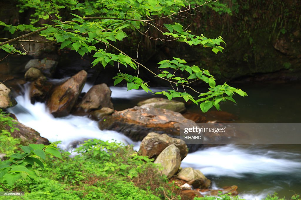 hongxi river in the primeval forest,guilin,china : Stock Photo