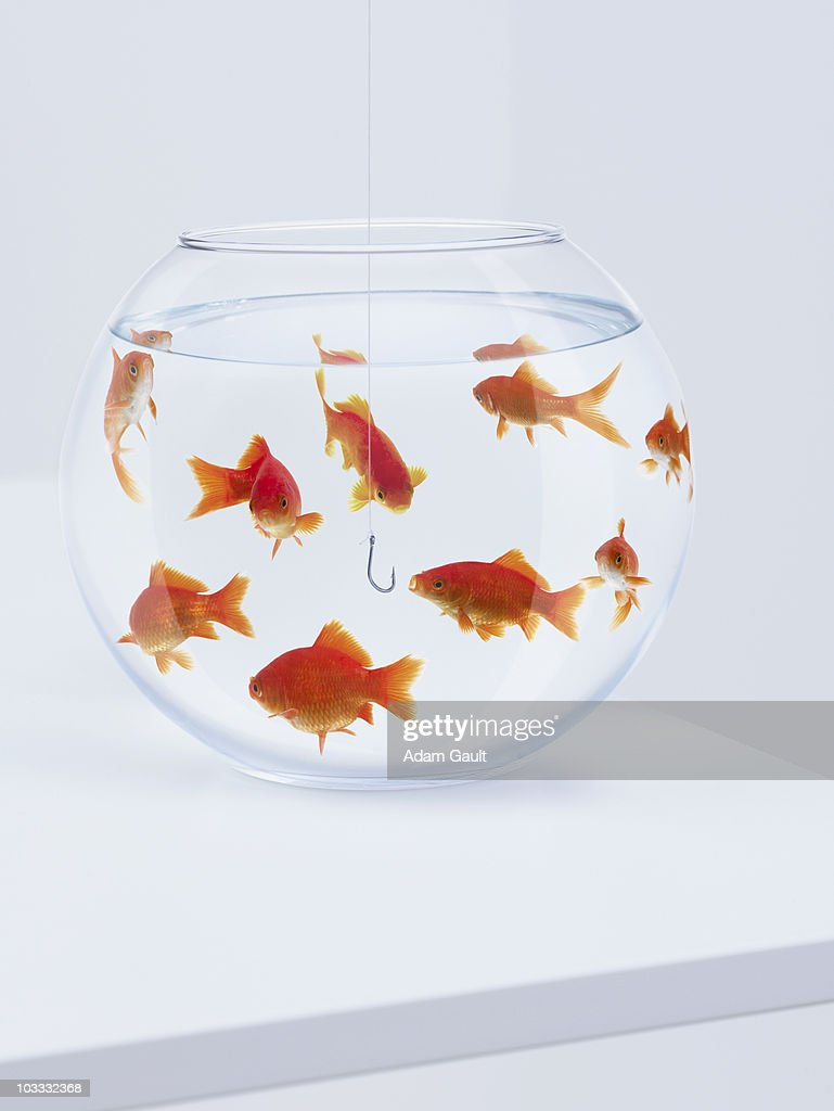 Hook hanging in fishbowl with goldfish : Stock Photo
