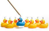 Hooking rubber duck