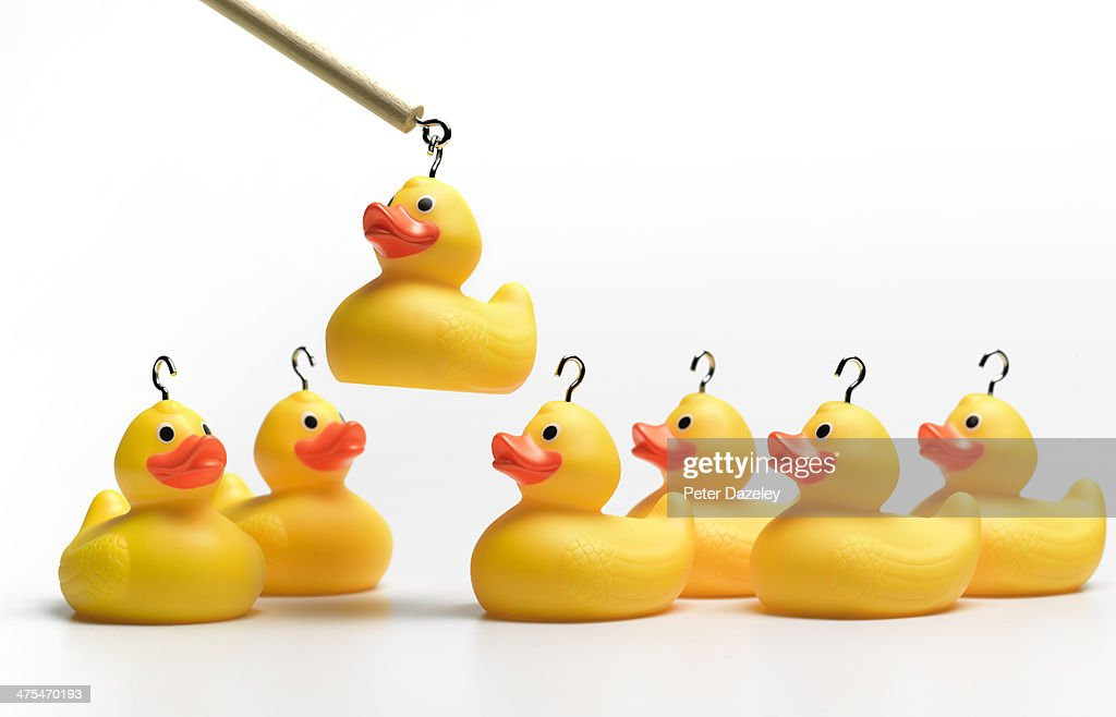 Hooking yellow rubber ducks : Stock Photo