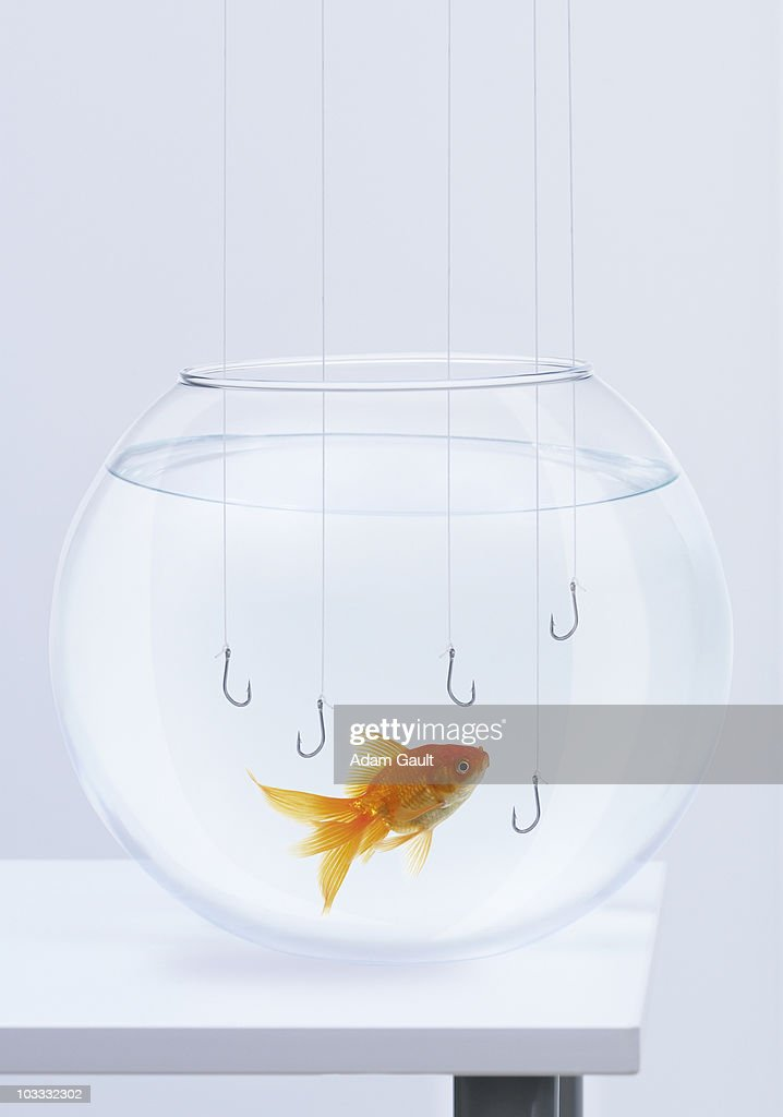 Hooks hanging in fishbowl with goldfish