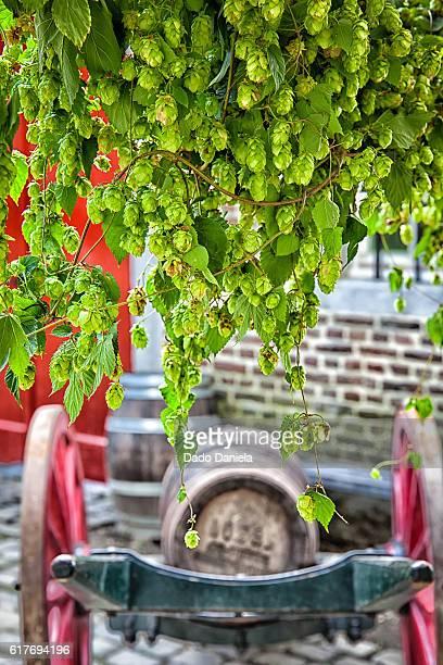 Hops and Beer Barrels