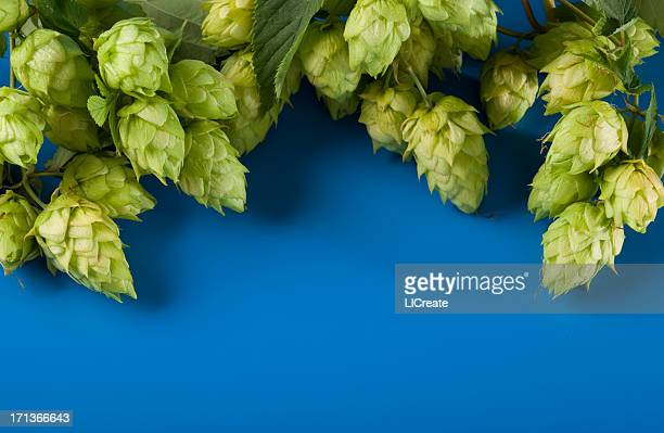 Hops - Freshly Harvested