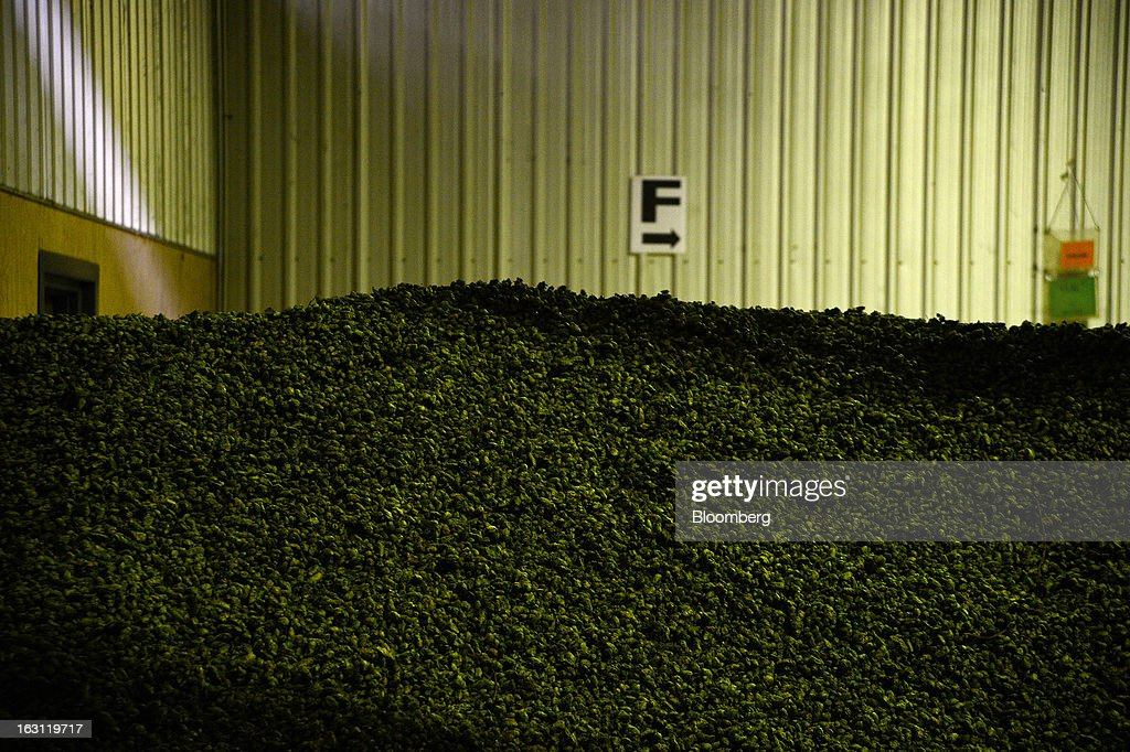 Hops sit in a stockpile after drying at Hops Products Australia's operations in Bushy Park, Tasmania, Australia, on Tuesday, Feb. 26, 2013. Australia's Bureau of Statistics is scheduled to release fourth-quarter gross domestic product figures on March 6. Photographer: Carla Gottgens/Bloomberg via Getty Images