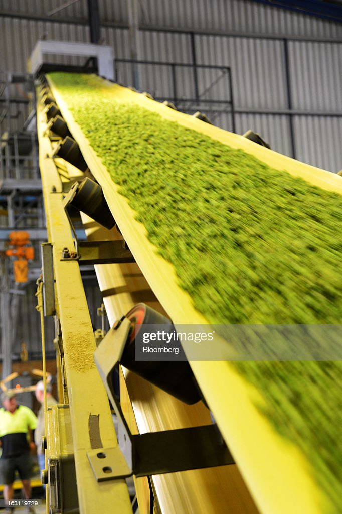 Hops travel along a conveyor belt towards the baling process at Hops Products Australia's operations in Bushy Park, Tasmania, Australia, on Tuesday, Feb. 26, 2013. Australia's Bureau of Statistics is scheduled to release fourth-quarter gross domestic product figures on March 6. Photographer: Carla Gottgens/Bloomberg via Getty Images