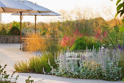 Horatio'S Garden, Salisbury Hospital, Wiltshire - Designer Cleeve West - Borders of Stachys byzanti