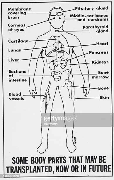 Medical Diagram Stock Photos And Pictures