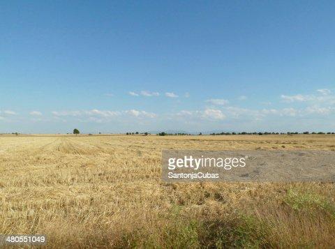 Horizont cultivos : Foto de stock