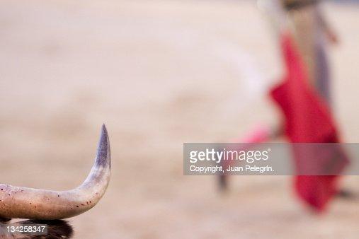Horn of bull