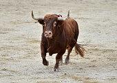 Horns of big bull