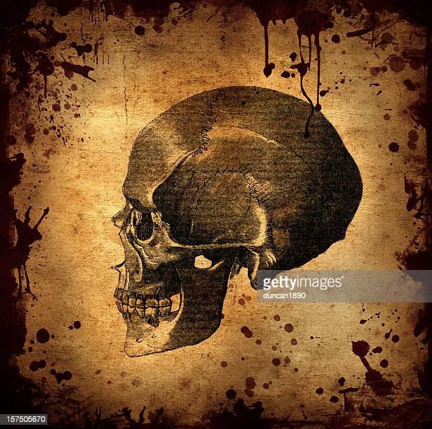 Horror Skull Halloween Background