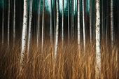 Horror Wood II