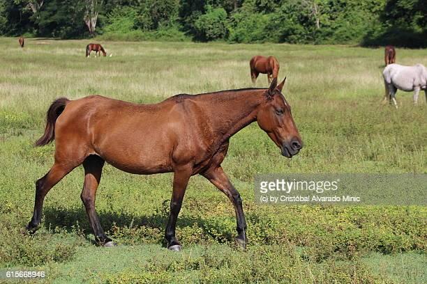 Horse Among Horses