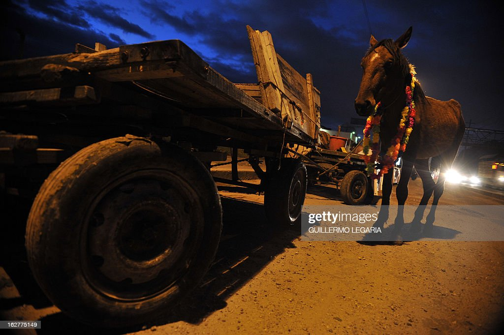 A horse and a cart are seen on February 26, 2013, in Bogota, Colombia, during a caravan of 50 recyclers, pickers and loaders, on horse-drawn carts, who will deliver their horses to the University of Applied Sciences and Environment (UDCA), where they will receive veterinarian care and will wait to be adopted, as part of a process to replace their carts by motor vehicles. The replacement was an initiative of the Mayor of Bogota, the Mobility Secretariat, and Animal Rights associations. AFP PHOTO/Guillermo Legaria